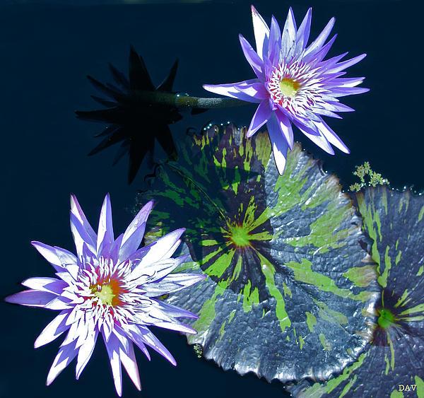 Waterlily And Pads Print by Debra     Vatalaro