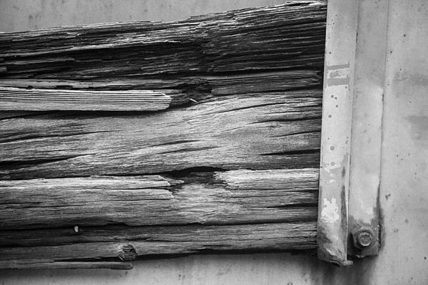 Weathered Wood Print by Toni Hopper
