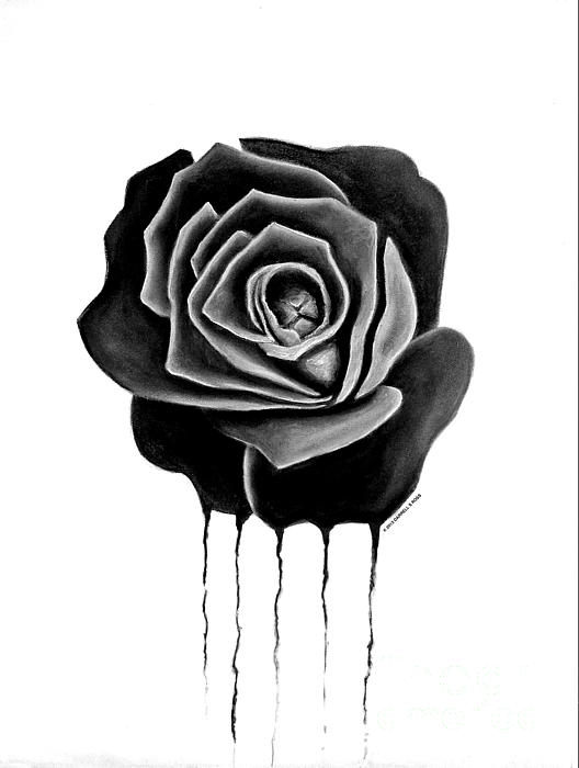 Weeping Black Rose Print by Darrell Ross