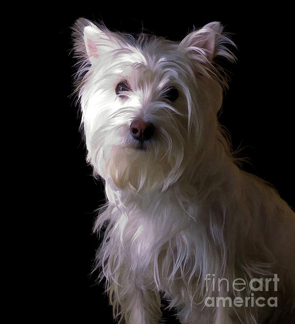 Westie Drama Print by Edward Fielding