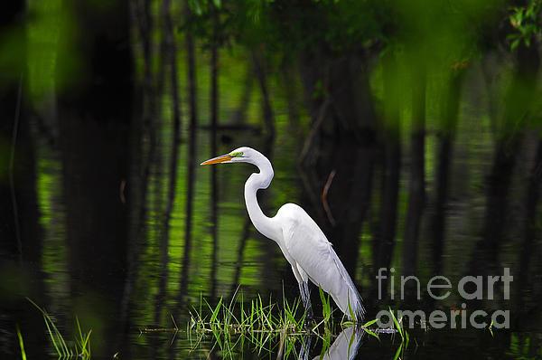 Al Powell Photography USA - Wetland Wader