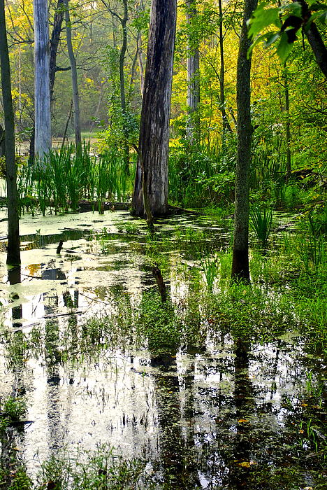 Wetlands Print by Frozen in Time Fine Art Photography