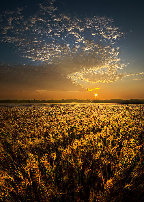 What Dreams May Come Print by Phil Koch