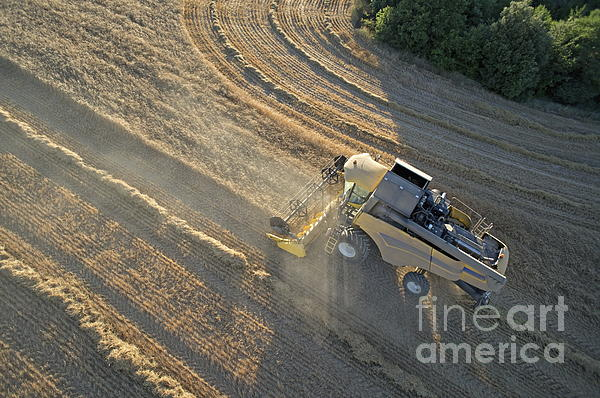 Wheat Harvest In Provence Print by Sami Sarkis