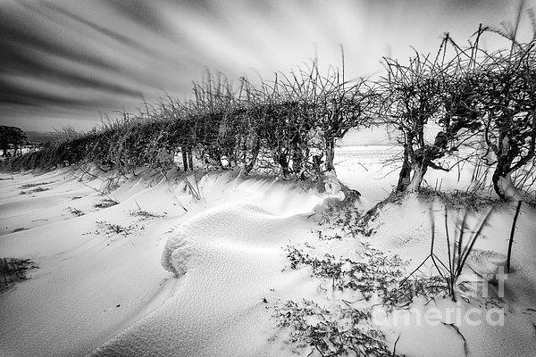 When The Wind Blows Print by John Farnan