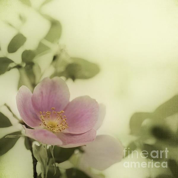 Where The Wild Roses Grow Print by Priska Wettstein