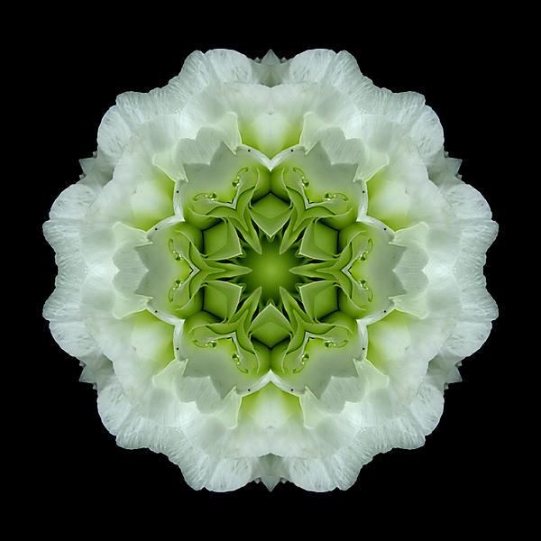 White And Green Begonia Flower Mandala Print by David J Bookbinder