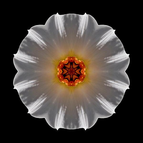 White And Orange Daffodil Flower Mandala Print by David J Bookbinder