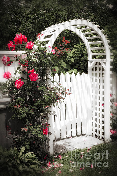 White Arbor With Red Roses Print by Elena Elisseeva