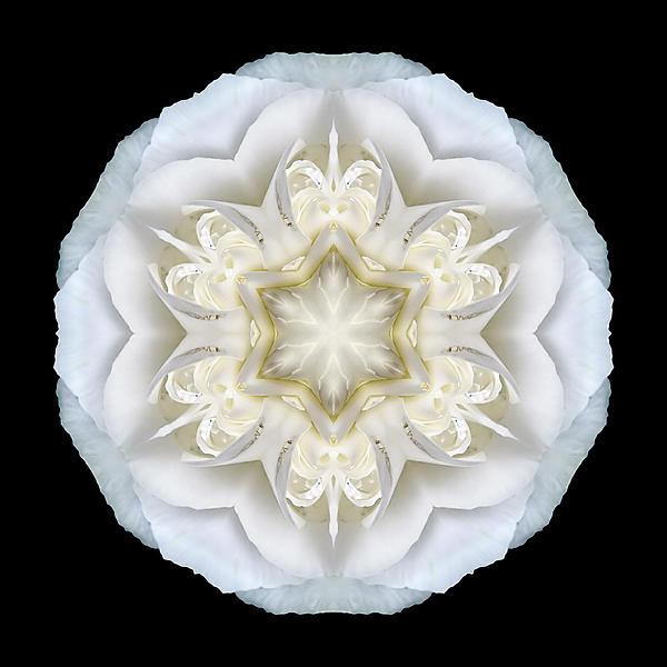 White Begonia II Flower Mandala Print by David J Bookbinder