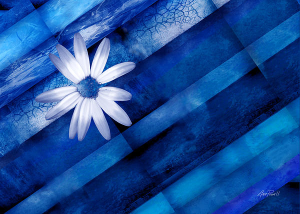 White Daisy On Blue Two Print by Ann Powell