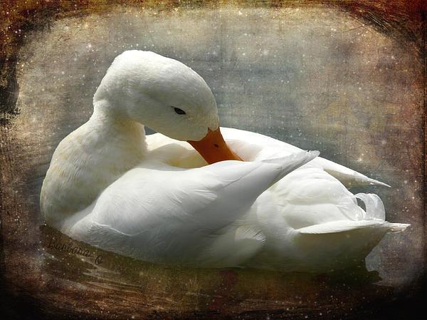 White Duck Print by Barbara Orenya