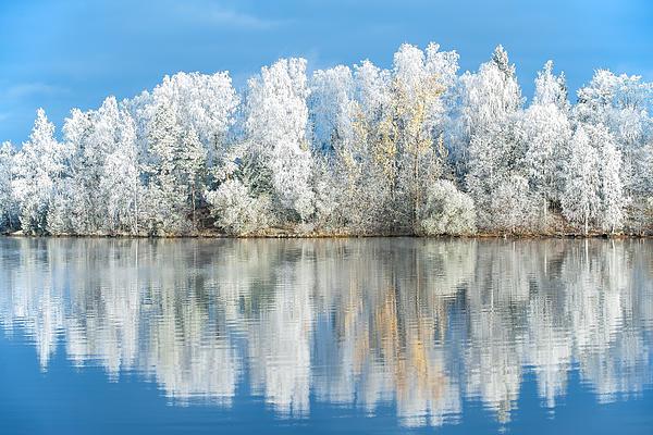 Ari Salmela - White Frost