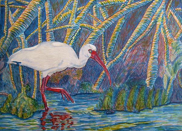 White Ibis In The Mangroves Print by Judy Via-Wolff
