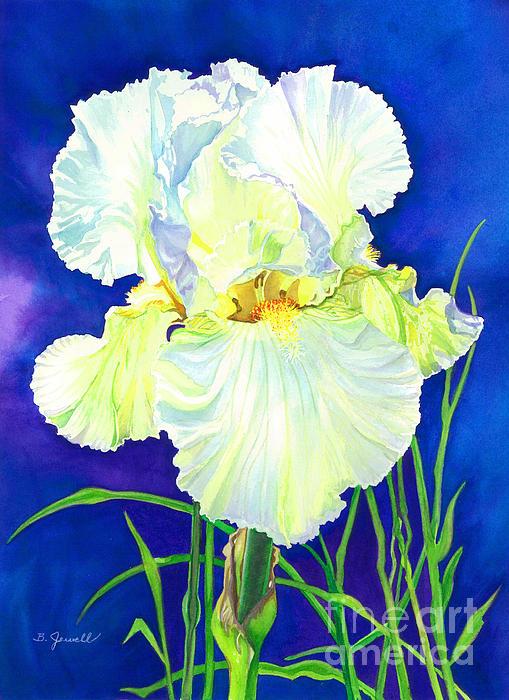 White Iris Print by Barbara Jewell