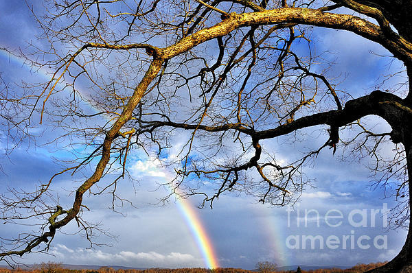 White Oak And Double Rainbow Print by Thomas R Fletcher