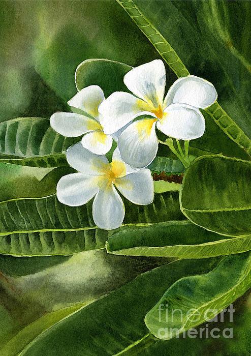 White Plumeria Flowers Print by Sharon Freeman