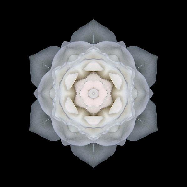 White Rose I Flower Mandala Print by David J Bookbinder