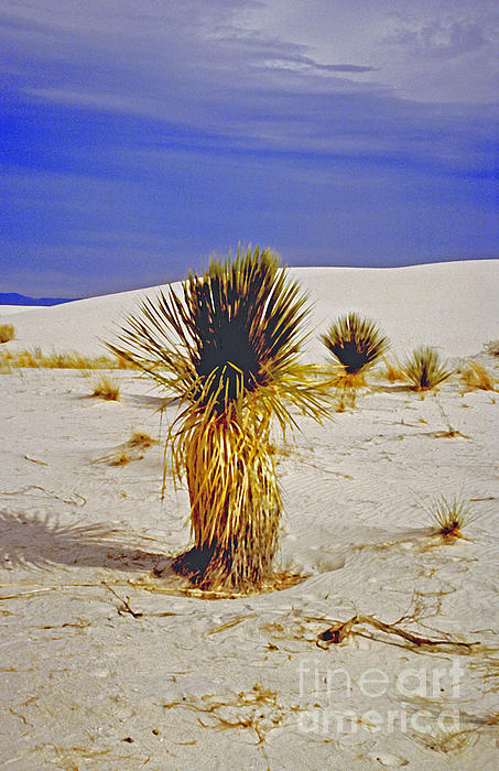 White Sands National Monument Cactus Print by ImagesAsArt Photos And Graphics