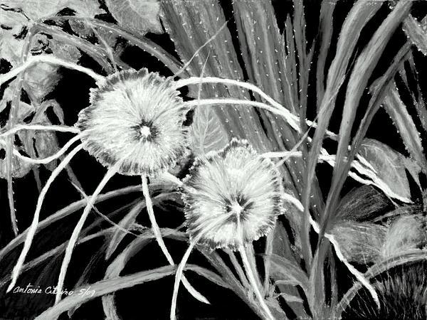 White Spider Lillies Pastel Print by Antonia Citrino