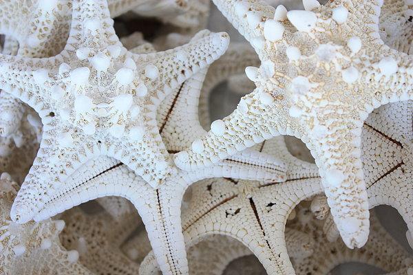 Carol Groenen - White Starfish