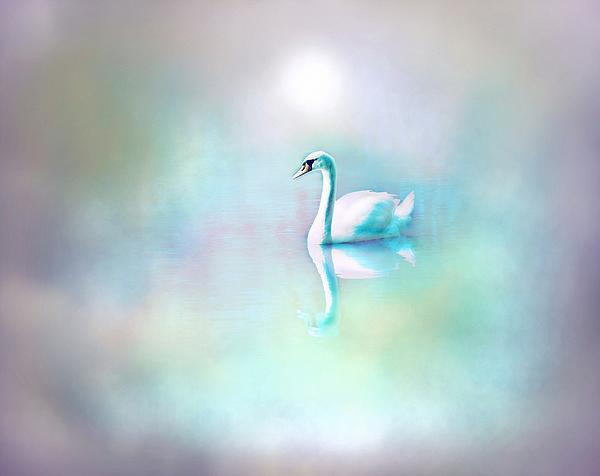 Lilia D - White Swan in the fog