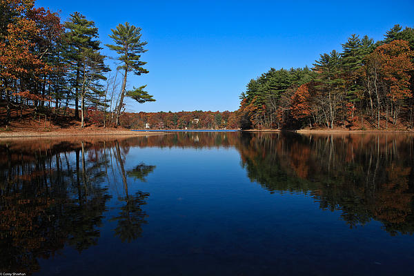 Whites Pond Print by Corey Sheehan