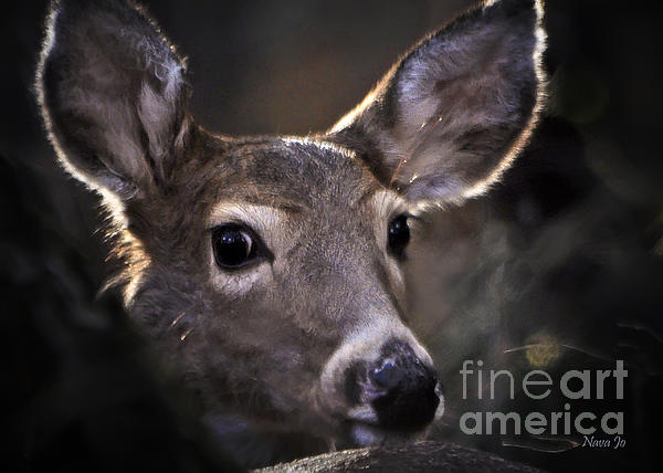 Whitetail Doe Print by Nava  Thompson