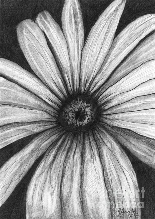 Wild Flower Print by J Ferwerda