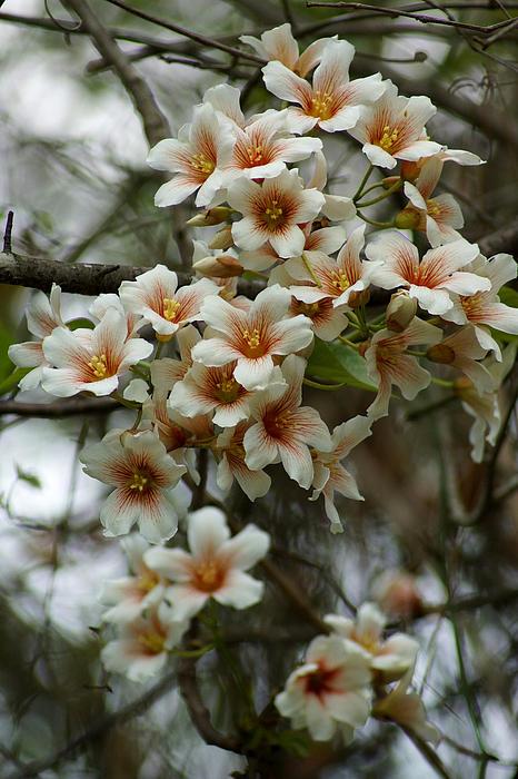 Wild Flowering Beauty Print by Kim Pate