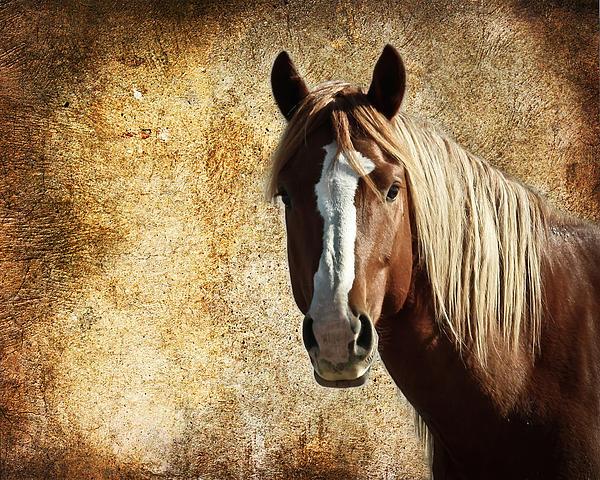 Wild Horse Fade Print by Steve McKinzie