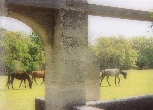 Kristy Cotone - Wild Horses Among The Ruins