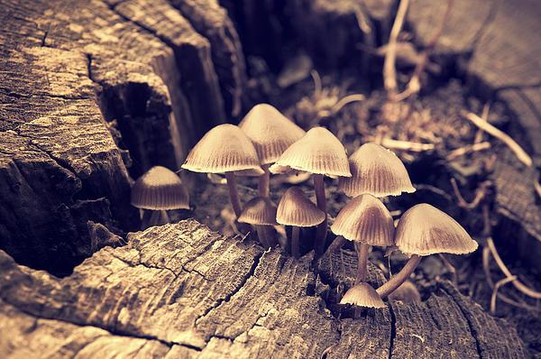 Wild Mushrooms Print by Amanda And Christopher Elwell