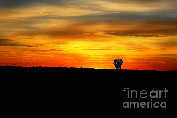 Wild Turkey At Sunset Print by Dan Friend