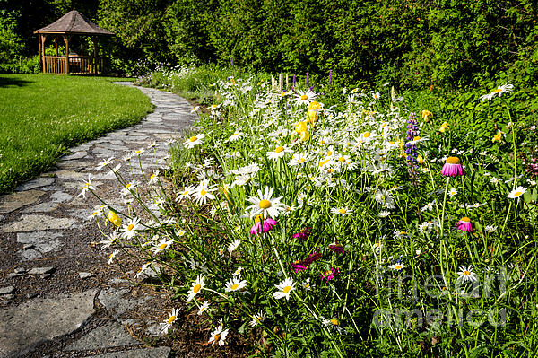 Wildflower Garden And Path To Gazebo Print by Elena Elisseeva