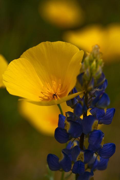 Saija  Lehtonen - Wildflower Tango