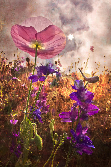 Wildflowers At Dawn Print by Debra and Dave Vanderlaan