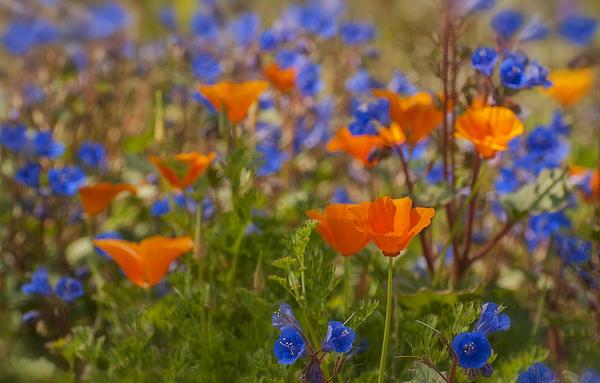 Saija  Lehtonen - Wildflowers