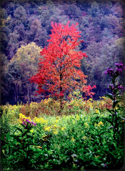 Wildwood Flowers Print by Karen Wiles