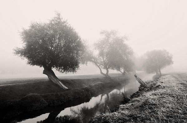 Marek Stepan - Willows In Fog