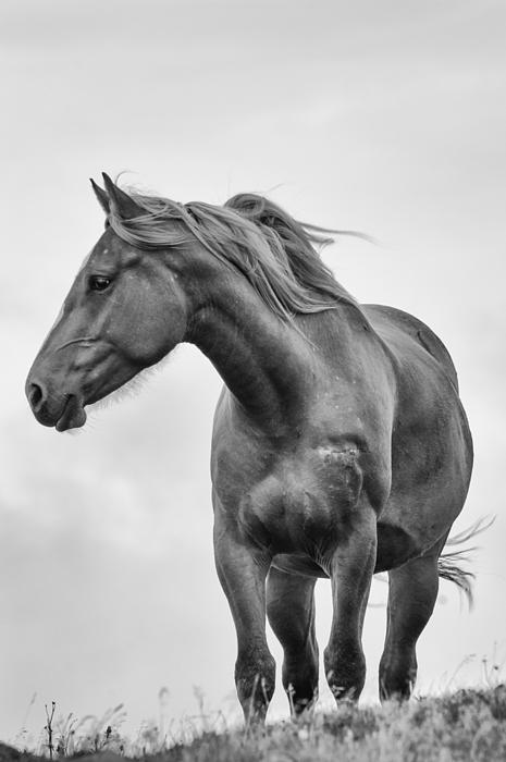 Windblown Horse Print by Tracy Munson