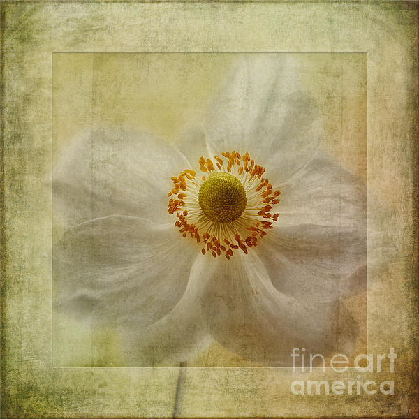 Windflower Textures Print by John Edwards