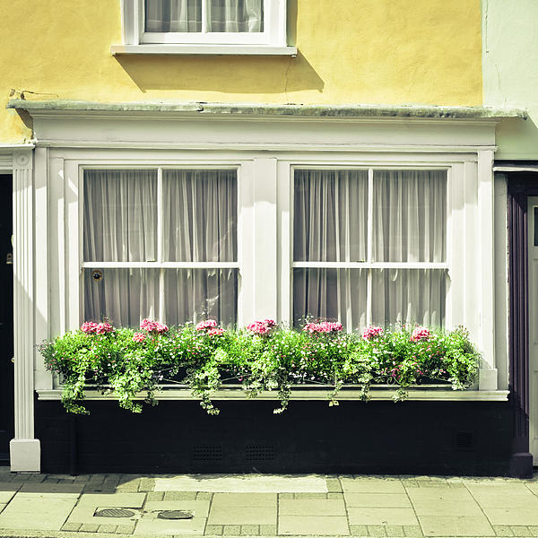 Window Garden Print by Tom Gowanlock