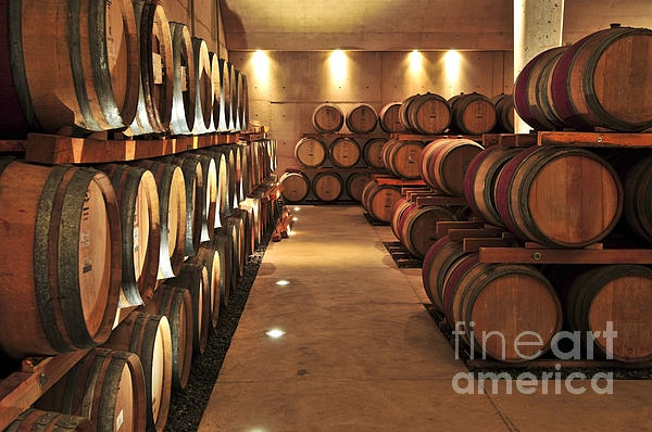 Elena Elisseeva - Wine barrels