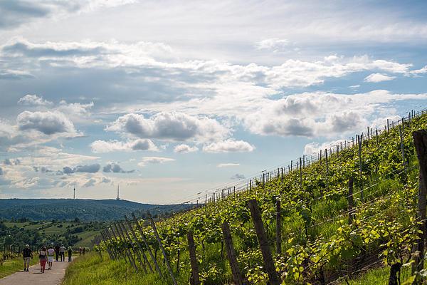 Wine Tour In Uhlbach Near Stuttgart - Germany Print by Frank Gaertner