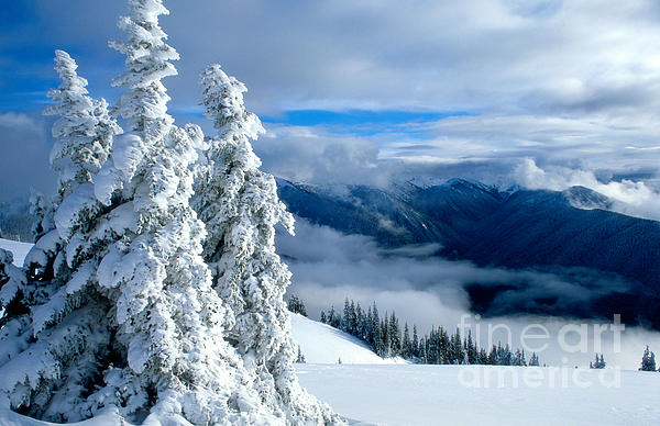 Lidija Kamansky - Winter at Hurricane Ridge