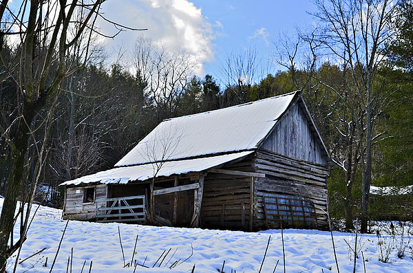 Winter Barn Print by Susan Leggett