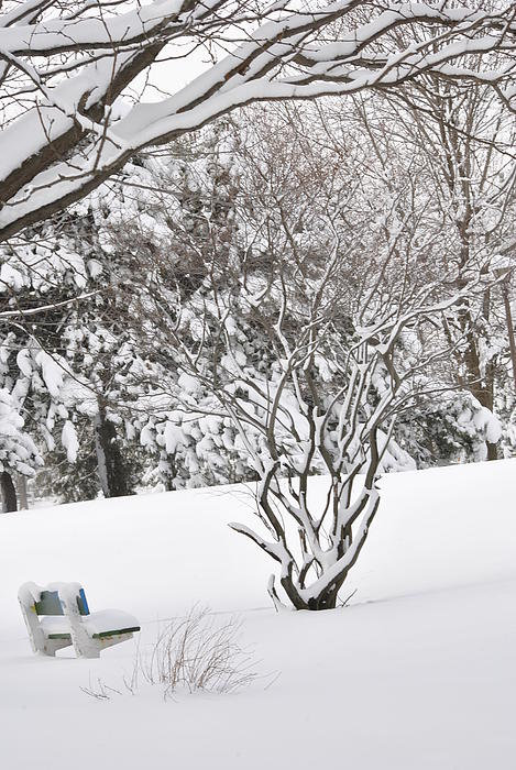 Winter Bench Print by Frederico Borges