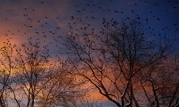 Winter Birds Print by Utah Images