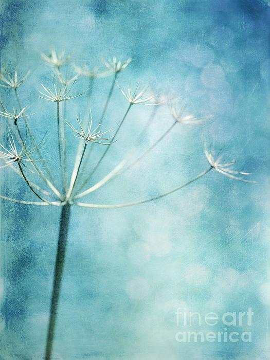 Winter Colors Print by Priska Wettstein
